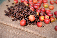 Fresh raw coffee beans. Close up of fresh raw coffee beans on texture background, selective focus Royalty Free Stock Photo
