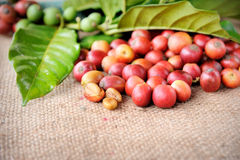 Fresh raw coffee beans with leaf Royalty Free Stock Photography
