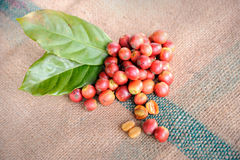 Fresh raw coffee beans with leaf. Close up of fresh raw coffee beans with leaf on texture background, selective focus Royalty Free Stock Image