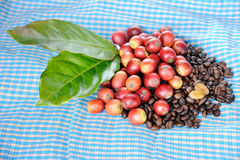 Fresh raw coffee beans with leaf Royalty Free Stock Images