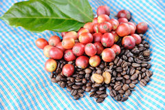 Fresh raw coffee beans with leaf. Close up of fresh raw coffee beans with leaf on texture background, selective focus Stock Photo