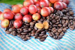 Fresh raw coffee beans with leaf. Close up of fresh raw coffee beans with leaf on texture background, selective focus Stock Photography