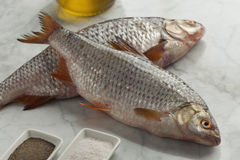 Fresh raw common roach. Fishes Stock Images