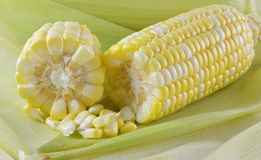 Fresh raw corn. On  background Stock Photography