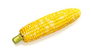 Fresh raw corn cob. Isolated on the white Royalty Free Stock Image