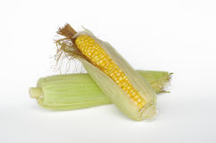 Fresh raw corn on the cob. Two ripe ear of corn isolated on a white background Stock Image