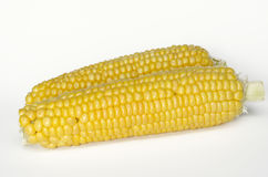 Fresh raw corn on the cob Royalty Free Stock Photography