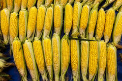 Fresh raw corn on the cob at the village market. Fresh raw corn on the cob at the village market Stock Image