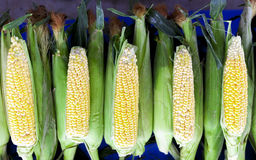 Fresh raw corn on the cob at the village market. Fresh raw corn on the cob at the village market Royalty Free Stock Photos