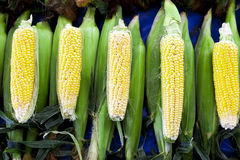 Fresh raw corn on the cob at the village market. Fresh raw corn on the cob at the village market Stock Photo