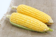 Fresh raw corn. On cobs Stock Images