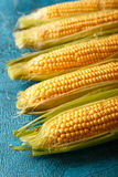 Fresh raw corn cobs. On blue concrete background Royalty Free Stock Photography