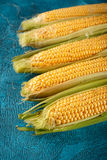 Fresh raw corn cobs. On blue concrete background Stock Photos