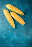 Fresh raw corn cobs. On blue concrete background Royalty Free Stock Photos