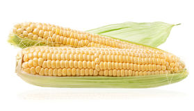 Fresh raw corn cobs. On white background Stock Photos