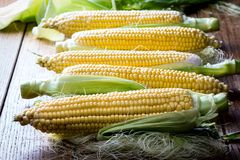 Fresh raw corn cobs. In wooden table background Royalty Free Stock Photo