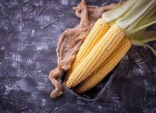 Fresh raw corn on concrete table. Selective focus Royalty Free Stock Image
