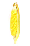 Fresh raw corn. Isolated on the white background Stock Photography