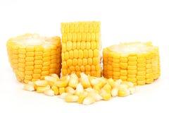 Fresh raw corn. Isolated on the white background Stock Image