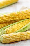 Fresh raw corn. Uncooked fresh corn in husk on the table Stock Photos