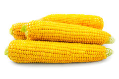 Fresh raw corn on white background. Isolated Royalty Free Stock Photos