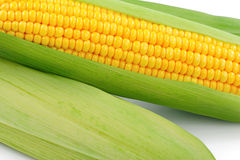 Fresh raw corn on white background. Isolated Royalty Free Stock Photography