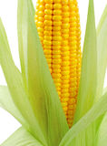 Fresh raw corn on white background. Isolated Royalty Free Stock Image