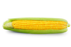 Fresh raw corn on white background. Isolated Royalty Free Stock Photo