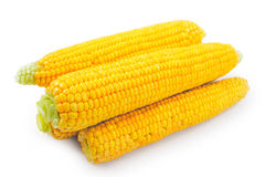 Fresh raw corn on white background. Isolated Stock Photo