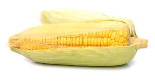 Fresh raw corn on white background. isolated. Sweet corn isolated on white background Royalty Free Stock Photos