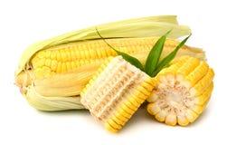 Fresh raw corn on white background. isolated. Sweet corn isolated on white background Royalty Free Stock Photography