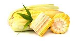 Fresh raw corn on white background. isolated. Sweet corn isolated on white background Royalty Free Stock Image