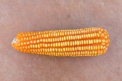 Fresh Raw Corn Royalty Free Stock Photos