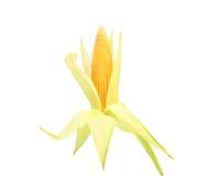 Fresh raw corncob isolated on the white. Background Royalty Free Stock Images