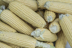 Fresh raw corns as a background Royalty Free Stock Image