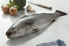 Fresh raw corvina fish Stock Photo