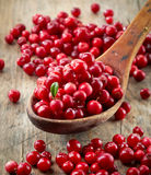 Fresh raw cowberries. In wooden spoon Royalty Free Stock Images