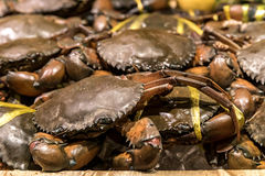 Fresh Raw Crab. Ready to cook Royalty Free Stock Photos