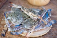 Fresh raw crab. On wooden dish, close up Stock Photography
