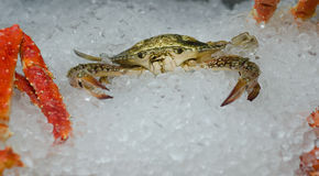 Fresh raw crab on ice Stock Photography