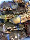 Fresh raw crab on ice for sell in the seafood market. Foods and cuisine concept royalty free stock photo