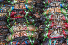 Fresh raw crab at seafood market. Fresh raw sea crab premium grade display for sale at seafood market Royalty Free Stock Images