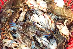 Fresh raw crabs in the fish market. Kep, Cambodia. Selective focus Stock Image