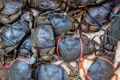 Fresh raw crabs. On fishmarket in Asia stock photography
