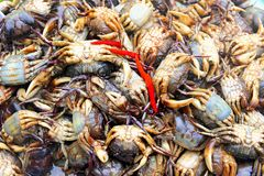Fresh raw crabs market, Cambodia. Fresh raw crabs at the street market in Cambodia, Asia Royalty Free Stock Images
