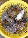 Fresh raw crabs in the yellow basket Royalty Free Stock Photos