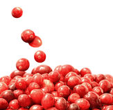 Fresh raw cranberries. One of the highest sources of antioxidants Stock Image