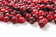 Cranberries isolated on white background. Fresh raw cranberries isolated on white background. closeup Stock Images