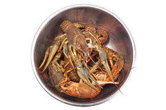 Fresh raw crayfishes in the iron bowl. Isolated on white background. Top view Stock Photo