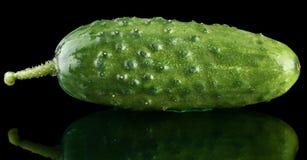 Fresh raw cucumber isolated on black. Background Royalty Free Stock Photo